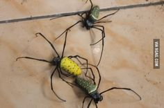 So I found them under my bed, where can I buy Flamethrower?