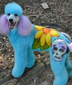 Extreme Dog Grooming