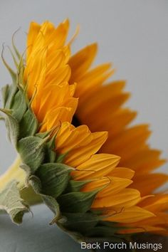 Tuesday Tidbits2..Sunflowers etc.