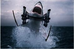 Great White Shark with Guns!!