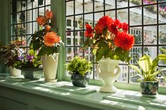 Five Easy Flowers to Grow in Small Spaces easy apartment plants, easi flower, small space, begonia flower