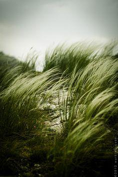 ♂ wild grass green nature Forêt de Saou #green #nature #outdoor