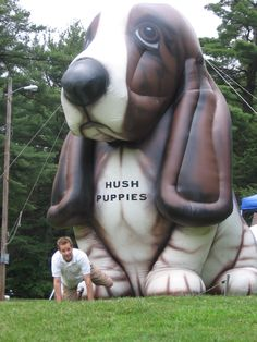 the Hush Puppies basset