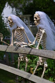 Skeleton Brides | Faith, Hope, Love, and Luck Survive Despite a Whiskered Accomplice