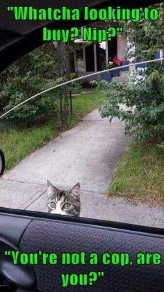 Nip dealing kitty...