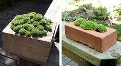more succulents in brick