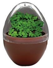 Grow your own good luck!