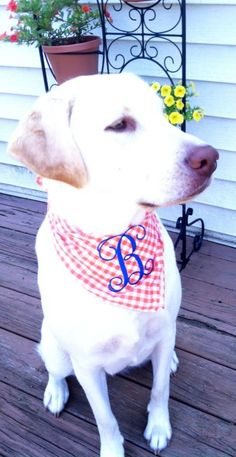 Miss Daisy modeling a monogrammed scarf