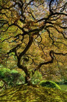 Summer Portland Japanese Gardens, Oregon