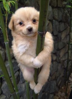 Up a pole and happy about it :)