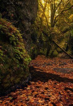 Autumn at Oneonta Gorge, Oregon