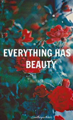 everything has beauty life quotes quotes photography quote beautiful flowers roses beauty red roses