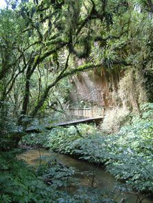 Track to Mangapohue Natural Bridge (Waikato)