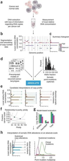 Absolute quantification of somatic DNA alterations in human cancer