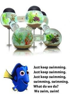 Theres Always Somewhere to Go in This Fish Tank