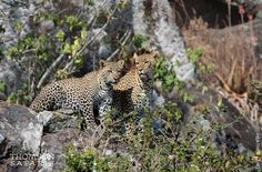 Photo by Thomson Safaris' guest, Heather Lang