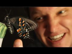 Butterfly Farming IS AMAZING - (Full Life Cycle) - Smarter Every Day 96 - YouTube