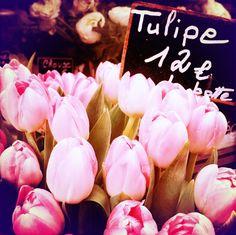 #tulip pink...