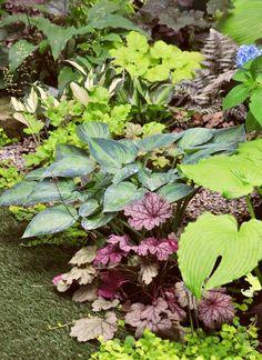 garden inspirations - hostas, heuchera, fern, and creeping jenny