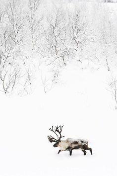 through the snow #splendidholiday