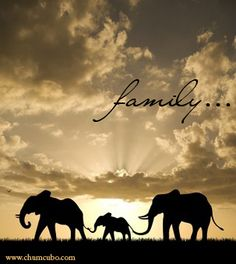 Family of elephants....<3