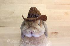 Cowboy Bunny