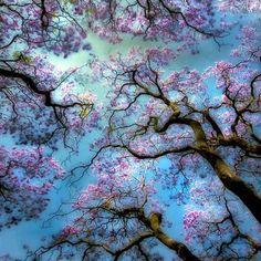 Nature:-)