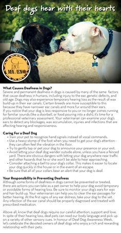 #GTPetMaven Celebrating National Deaf Dog Awareness Week