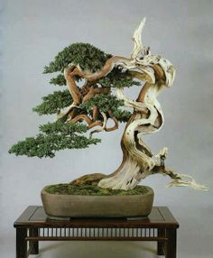 Bonsai Tree Art... on Pinterest