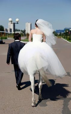 Funny Wedding Picture leg, horses, weddings, funni, the bride, wedding photos, funny photos, wedding pictures, perfectly timed photos
