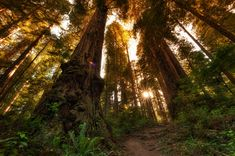 James Irvine Trail -PRAIRIE CREEK REDWOODS STATE PARK
