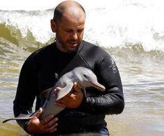 Baby dolphin ♥