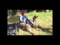Click here to watch how to introduce a new Puppy to a Dog by professional dog trainer Doggy Dan http://www.howtobeadogtrainer.co.uk/basic-training/  #dogtraining #leash