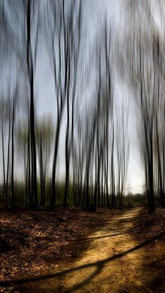 Trees. S)