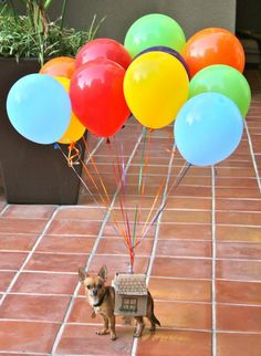 halloween - up costume for dogs