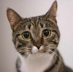 hi kitty