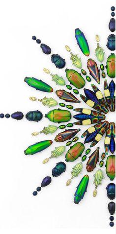 "Artist Christopher Marley - ""Pheromone"" organic insect designs"