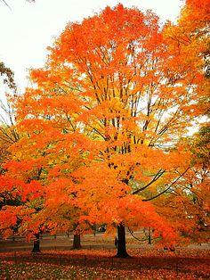 Central Park, New York City. Fall into Autumn