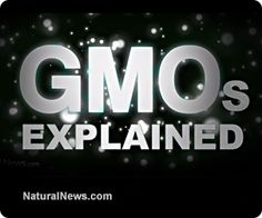 "Health Ranger launches new 3-minute video ""GMOs Explained."" It's the perfect intro video for people who are new to the topic of GMOs. Covers all the main issues in just 3 minutes: http://www.naturalnews.com/041645_GMOs_explained_video_genetic_pollution.html"