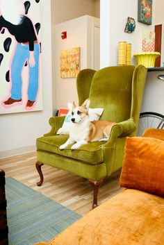 Corgi in a chair.