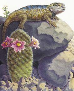desert spiny lizard and mammilaria cactus - Paul Mirocha
