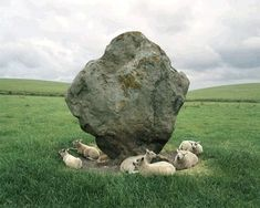 Sheep and Standing Stone, Avenbury, England, Photographer: Barry Andersen