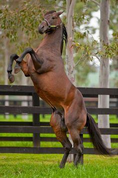 Street Sense. Darley Kelvinside. What a horse!