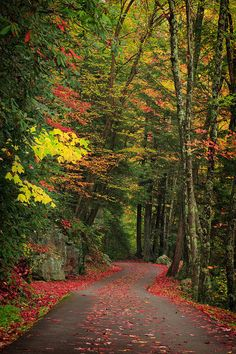 forests, mountains, forest path, paths, tennessee