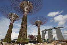 Supertrees in Singapore - Giant concrete and metal 'plants' create a manmade woodland