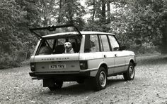 Rover w/ pup