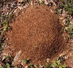 Help in getting rid of Ant Hills