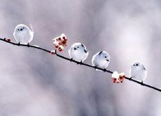 little birds all in a row.