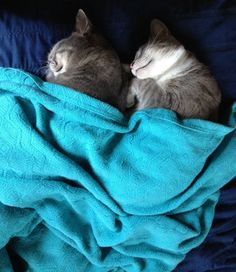 .snuggly #cats