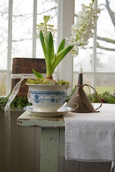 Bulbs in ironstone. Kitchen garden.
